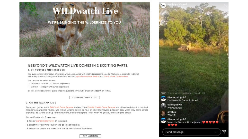 screenshot of &Beyond's website detailing how to watch their safaris online and screenshot of their instagram live story